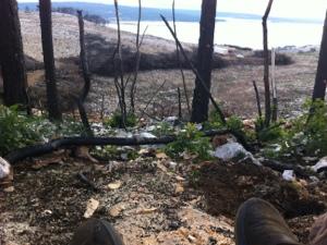 Novi jarbol za Bente Dorte, dio prvi: jarbol se rađa u šumi  Adriatic Mariti...